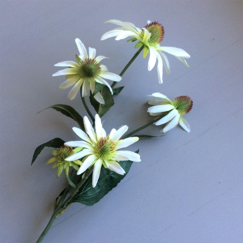 White Rudbeckia Stem