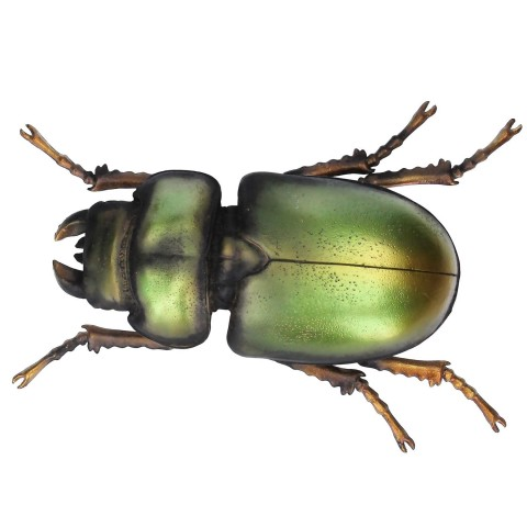 Green Beetle With Wall Hook