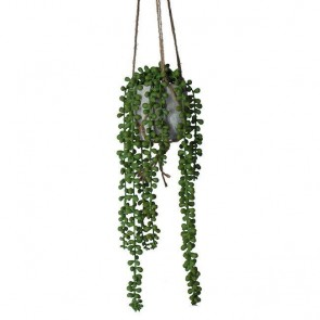 String of Pearls Mini Hanging Plant