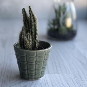 Green Scallop Plant Pot - Mini