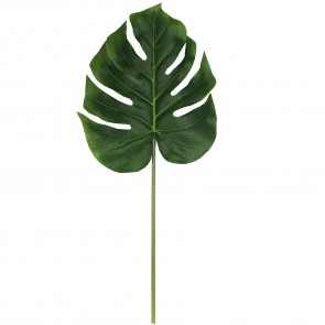 Green Swiss Cheese Leaf Stem