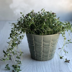 Green Scallop Plant Pot