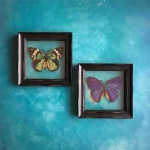 Pair Of Butterfly Pictures